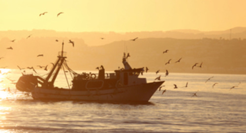 Global standards on seafood traceability launched: 'Knowing your supply chain is a must'