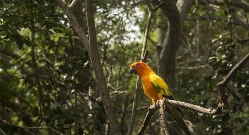 Brésil : la déforestation en Amazonie a augmenté de 88 % en juin
