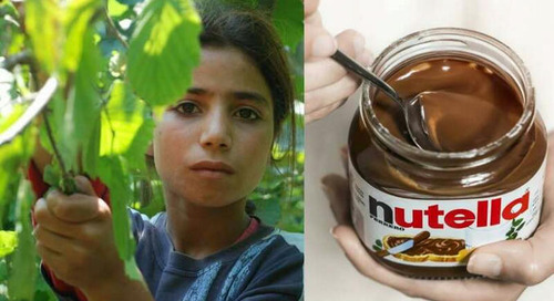 Ferrero and Ilo in Turkey, to fight child labor in the hazelnut harvest