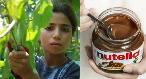 Ferrero and Ilo in Turkey, to fight child labor in the hazelnut harvest