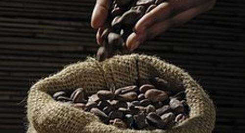 La déforestation et le travail des enfants gangrènent encore la culture du cacao, selon des experts