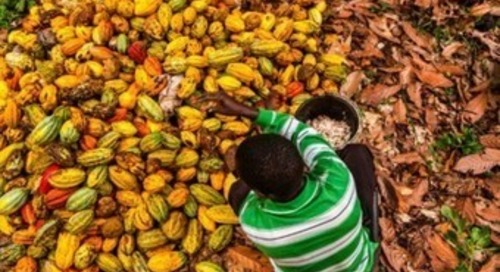 US senators respond to reports of cocoa sourced with the help of child labor