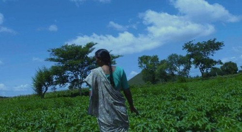 PVH reveals ambitious sustainability goals