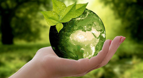 Echte Nachhaltigkeit vs. Greenwashing