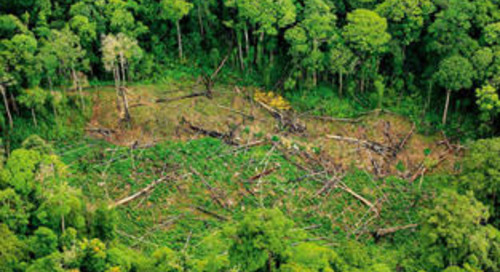 Boris Johnson unveils £3bn climate finance push to help safeguard global biodiversity