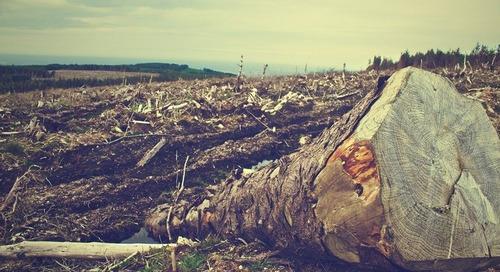 L'industrie alimentaire met la pression sur la Grande-Bretagne pour protéger les forêts tropicales