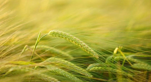 Sustainability at Bayer: Getting from the pledge to action