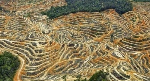 Investigation begins into alleged deforestation by Olam, 'world's largest farmer'