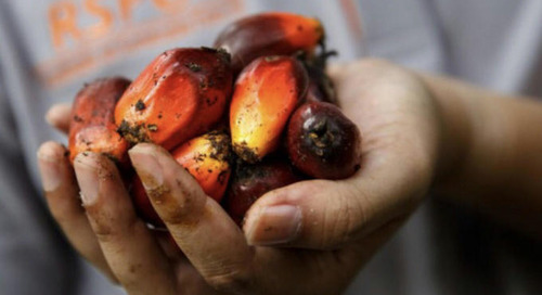 Cargill Shifts NC Plant to Provide RSPO-Certified Palm Oil