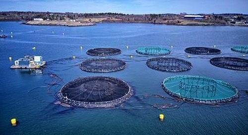 What Sustainable Seafood Success Looks Like