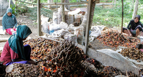 Palm oil supplier loses RSPO certification