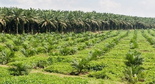 L'Oréal and Beiersdorf Lead Sustainable Palm Oil Sourcing Commitment