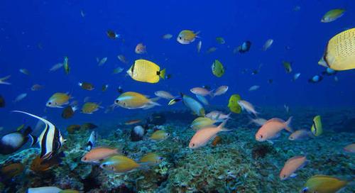 Biodiversité: les Nations unies appellent à «une ambition beaucoup plus grande»
