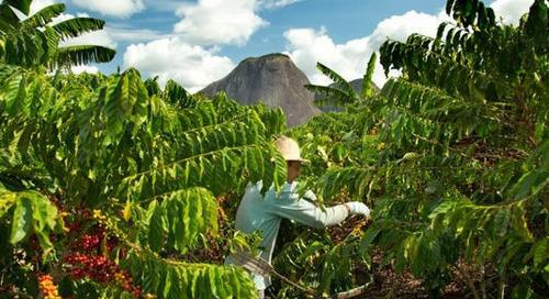 Nescafé bis 2025 nur noch aus nachhaltiger Beschaffung