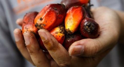 BASF, die Estee Lauder Companies und der Roundtable on Sustainable Oil sowie Solidaridad: Partnerschaft für nachhaltige Palmölproduktion