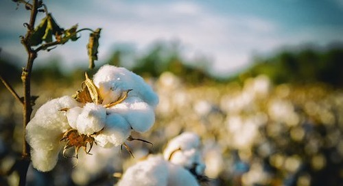 YESS Aims to Eliminate Modern Slavery in Cotton Sourcing