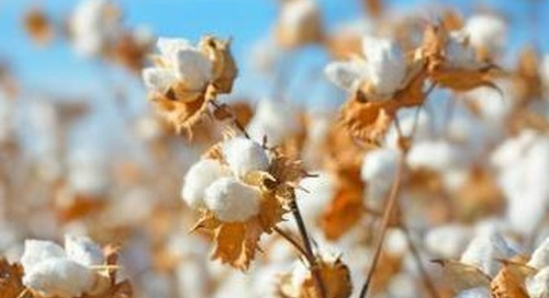 Supima cotton origin mapped to tackle supply fraud