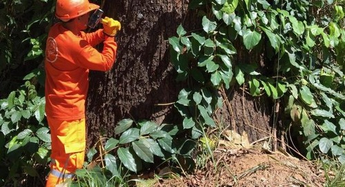 Kew Gardens uses DNA to tackle illegal logging