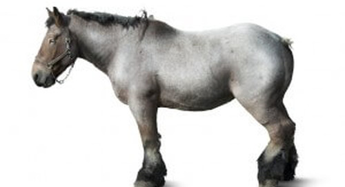 Horses or Trucks? The Cloud Business Intelligence Lesson From The First World War