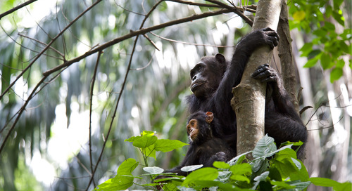 Supporting Community-Driven Conservation Programs with the Jane Goodall Institute