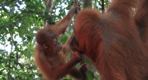 Highlights of Sumatra