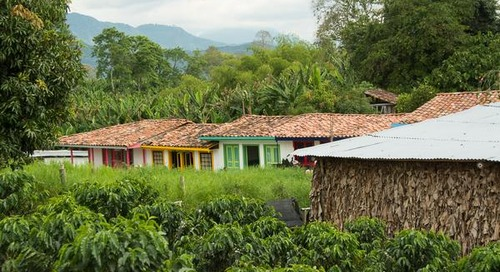 Top 8 Experiences from Colombia