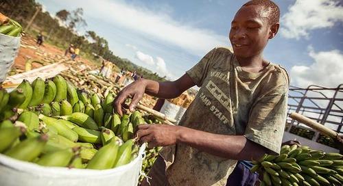 Understanding Kampala
