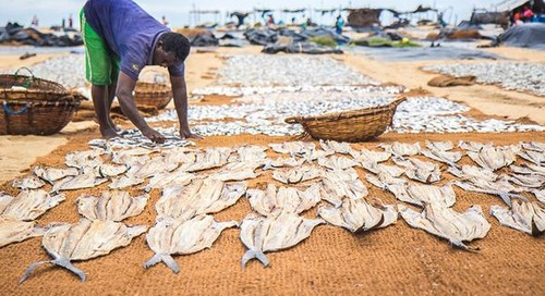 Hooked! Shopping a Sri Lankan Fish Market