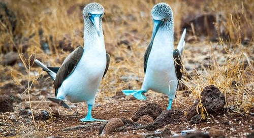 6 Things You Might Not Know About the Galápagos Islands
