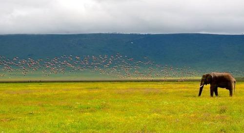 African Safari: Tanzania's Ngorongoro Crater