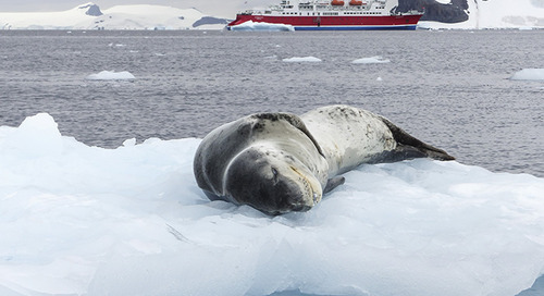 Where to see seals, sea lions and walruses on tour