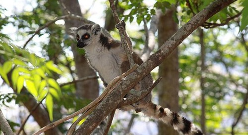Visual Adventure: Madagascar
