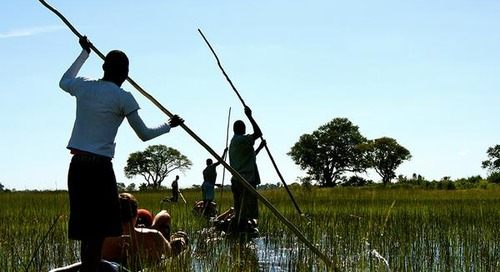 Hippo Highway: Camping in the Okavango Delta
