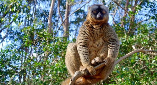 Hiking Madagascar's lemur trails