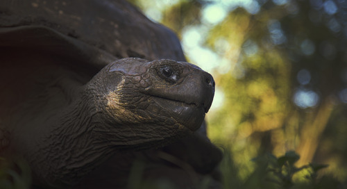 The spectacular wildlife, green beaches,and strange history of Floreana, in the Galapagos Islands