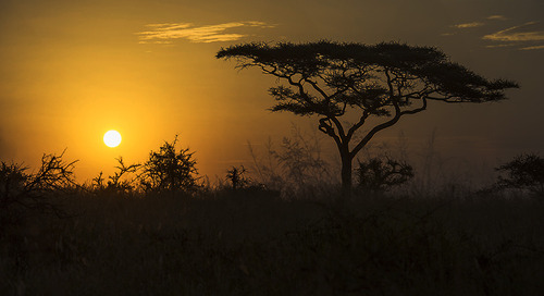 "Beyond the ""Big 5:"" What to watch out for on the Serengeti"