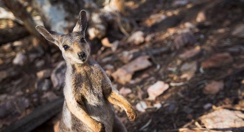 Top 5 Adventures in Western Australia