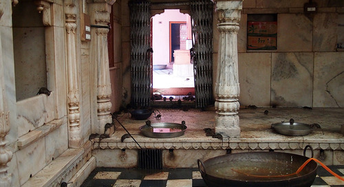 Rajasthan's rat temple