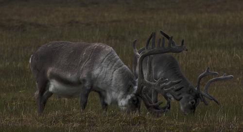 Antarctic animals vs. Arctic beasts: A quick look at who lives where