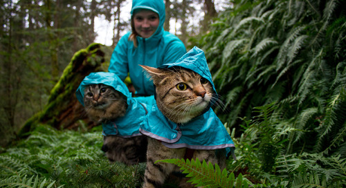 Meet Bolt and Keel, Canada's adventure cats