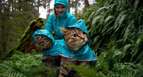 Meet Bolt and Keel, Canada's adventure cats