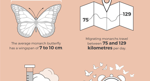 The annual monarch migration: By the numbers