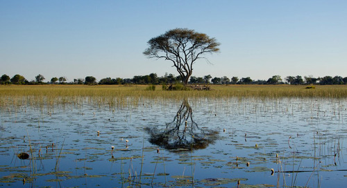 The importance of the Okavango Delta