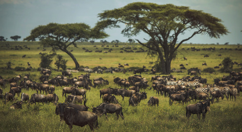 The Serengeti Migration: By the numbers