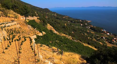 Pelješac, just outside of Dubrovnik, is a little slice of Adriatic heaven