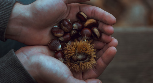 The health benefits of chestnuts — a Tuscan specialty — are more varied than you might think