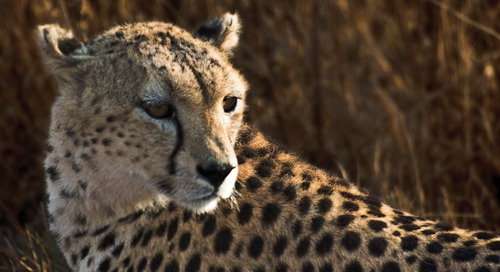 4 amazing animal conservation projects (and how you can visit them)