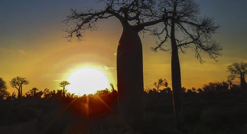 In Madagascar, Soa Zara is turning back the clock on deforestation