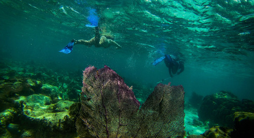 Sea life-spotting in the world's best snorkelling destinations
