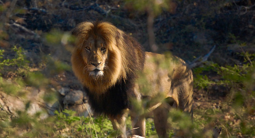 Think you know the animals of the Lion King? Think again